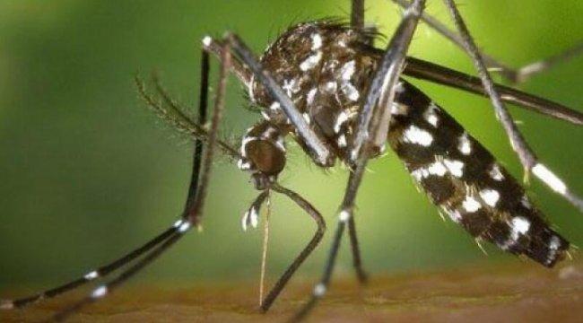 Batı Nil virüsüne dikkat