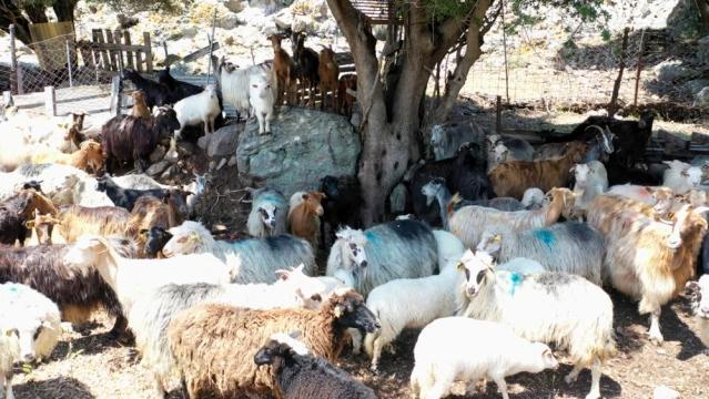 Çanakkale Birlik'ten çiğ süt raporu