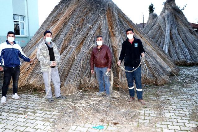 Samsun'un Vezirköprü ilçesinde büyük umutlarla ekilen kenevirler üreticinin elinde kaldı
